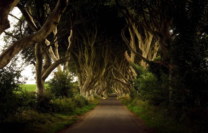 The Dark Hedges Game of Thrones Filming Location